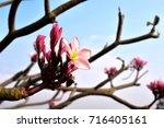 flower in park | Shutterstock . vector #716405161