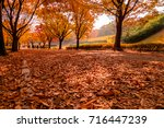 Small photo of Autumn Park streets with accumulated leaves.
