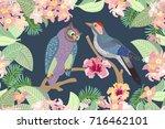 nightfall in the garden.... | Shutterstock .eps vector #716462101