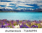 Lake Tekapo  South Island  New...