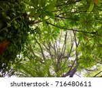 below green tree background... | Shutterstock . vector #716480611