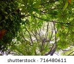 below green tree background... | Shutterstock . vector #716480611