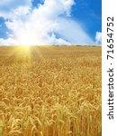 Grain Field Under Beautiful Sk...