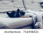 lazy cat lying by warm woolen... | Shutterstock . vector #716548321
