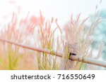 Grass Flower On Fence With Two...