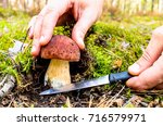 the search for mushrooms in the ... | Shutterstock . vector #716579971
