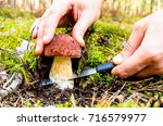 the search for mushrooms in the ...   Shutterstock . vector #716579977