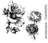 wild flowers roses isolated.... | Shutterstock .eps vector #716590291