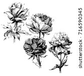 wild flowers roses isolated.