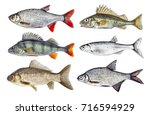 live fresh fish isolated set | Shutterstock . vector #716594929