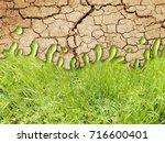 photo manipulation of dry...   Shutterstock . vector #716600401