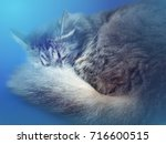 photo of sleeping cat with blue ...   Shutterstock . vector #716600515