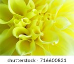 photo of detail of beautiful...   Shutterstock . vector #716600821