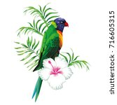 green parrot with tropical... | Shutterstock .eps vector #716605315