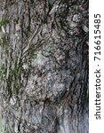 Small photo of The bark of the tree. Macro.