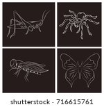 set of cards with insects. hand ... | Shutterstock .eps vector #716615761