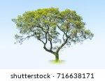 Small photo of a big tree isolated on blue sky , acacia confusa