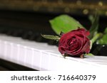 the red rose on keyboard of... | Shutterstock . vector #716640379