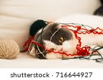 Stock photo a cat playing with yarn on a sofa 716644927
