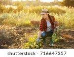 young woman gardener with beet...   Shutterstock . vector #716647357