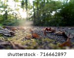 trail leaves | Shutterstock . vector #716662897