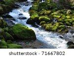 The Forest Creek  Gljun. Bovec...