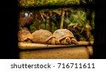 seychelles turtles natural... | Shutterstock . vector #716711611