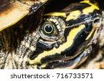 Turtle  Tortoise  Soft Shell...