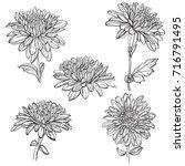 set of vector outline flowers... | Shutterstock .eps vector #716791495
