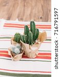 the bright cactus on the table | Shutterstock . vector #716791597