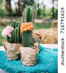 the bright cactus on the table | Shutterstock . vector #716791624