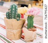 the bright cactus on the table | Shutterstock . vector #716791627
