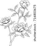 flower outline | Shutterstock .eps vector #716803675