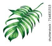 watercolor painting fern green... | Shutterstock . vector #716831515