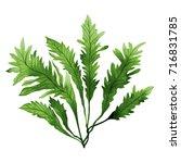Green Leaf Green Seaweed  Kelp...