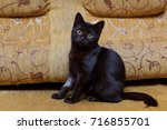 Stock photo cat 716855701