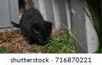 Stock photo kitten in barn 716870221