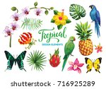 Tropical collection: exotic flowers, leaves, fruits, birds and butterflies. Vector design isolated elements on the white background.