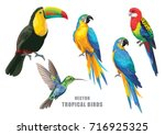 Stock vector tropical birds collection parrots humming bird and toucan vector design isolated elements on the 716925325