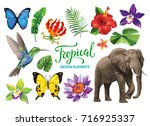 tropical collection  exotic... | Shutterstock .eps vector #716925337
