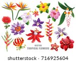 Stock vector tropical flowers set vector design isolated elements on the white background 716925604