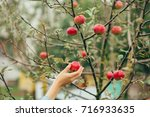 woman hand picking an apple | Shutterstock . vector #716933635
