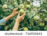 woman hand picking an apple | Shutterstock . vector #716933641