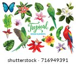 tropical summer collection ... | Shutterstock .eps vector #716949391
