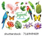 tropical collection  exotic... | Shutterstock .eps vector #716949409