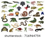 Various Reptile and Amphibian Vector Illustration
