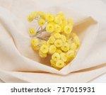 immortelle. dwarf everlast... | Shutterstock . vector #717015931
