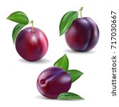 quality realistic vector plum... | Shutterstock .eps vector #717030667