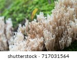 Closeup To White Coral  ...