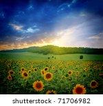 sunset over sunflowers field   Shutterstock . vector #71706982